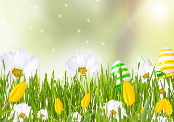 daisy with greengrass and tulip on nature background