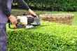 A gardener trimming green bush with trimmer machine