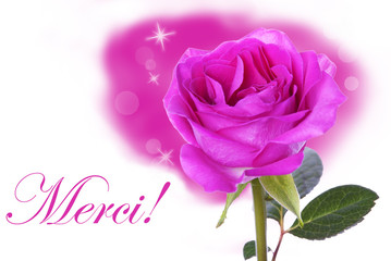 Pink Rose with Merci