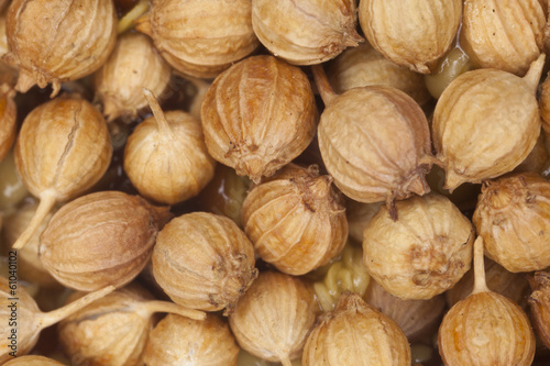 coriander seed, close-up for surface texture of coriander seed