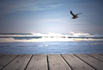gabiota en el mar