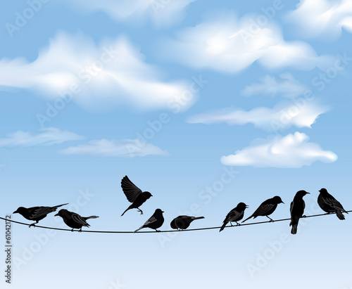 Set of birds on wires over blue sky background.