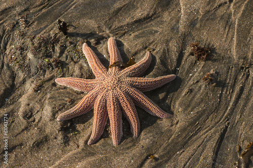 isolated starfish on volcanic sand