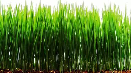 Gras darüber wachsen lassen
