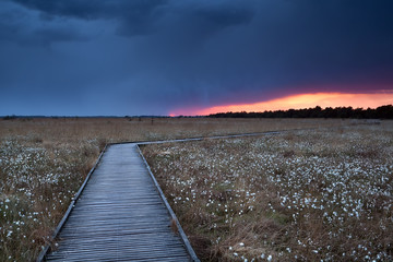 wooden path on marsh with cotton grass at sunset