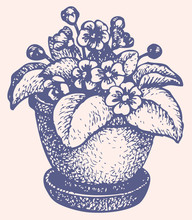 Rysunek wektor. Kwiaty w doniczce