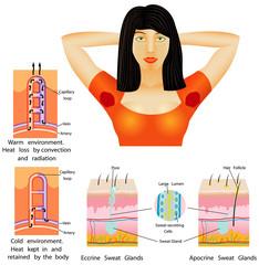 Beauty female armpit sweat