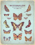 vintage placard with colorful butterfly illustrations