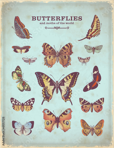 Poster Vlinders in Grunge vintage placard with colorful butterfly illustrations
