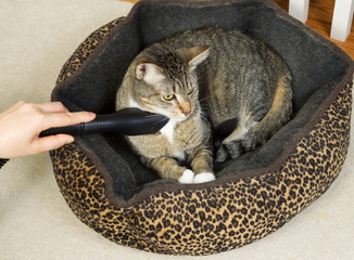 Cleaning pet cat bed