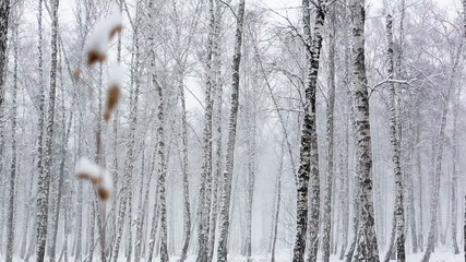 Snow Fall in the Woods