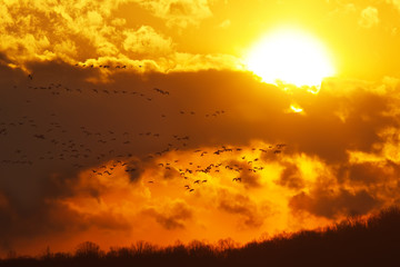 Geese Flying at Sunset