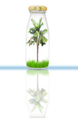 plam tree in bottle