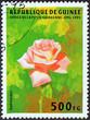 Gail Borden rose (Guinea 1995)
