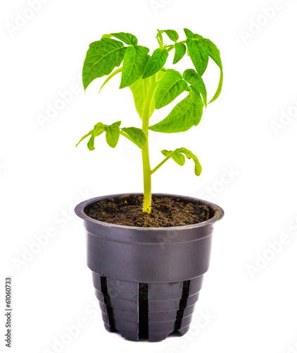 Green seedling is isolated on white background
