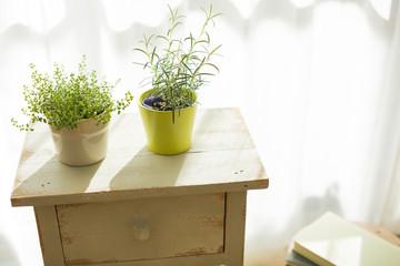 部屋の中にある観葉植物
