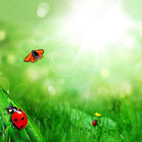 sunny green field with ladybugs and butterfly
