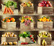 collage of various fruits and vegetables - 61065366