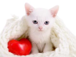 kitten with heart