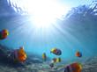 Leinwanddruck Bild - Fish