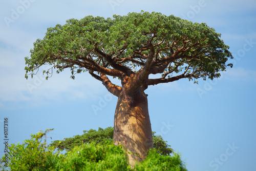 Leinwanddruck Bild Baobab