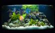 Aquarium fishes - 61075179