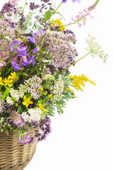 Bouquet of medicinal herbs on a white background