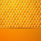 Vector Illustration of a Natural Background with Honeycombs