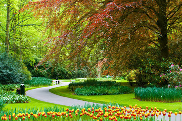 Beautiful Keukenhof spring garden