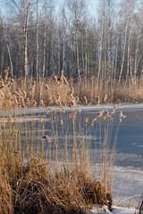 Lake Pogoria. Winter time landscape in Poland