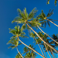 Top of palm tree on blue sky background