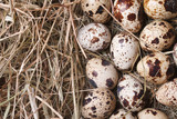 quail eggs on a hay closeup. macro. horizontal.