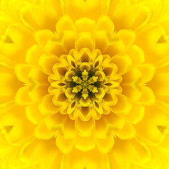 Yellow Concentric Flower Center. Mandala Kaleidoscopic design