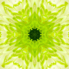 Green Concentric Flower Center. Mandala Kaleidoscopic design