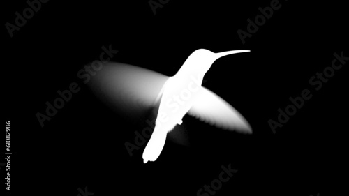 humming bird, looped 3d animation. alpha-matte
