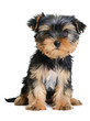 StickerYorkshire terrier