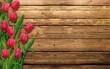 Obrazy na płótnie, fototapety, zdjęcia, fotoobrazy drukowane : Tulipani rossi