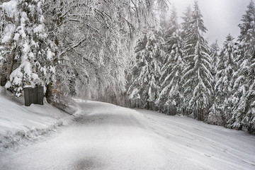 Snowy winter road thru the forest
