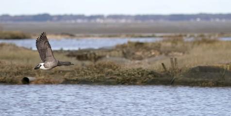 tonne de chasse au gibier d'eau, bassin d'arcachon