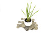 coins money plant
