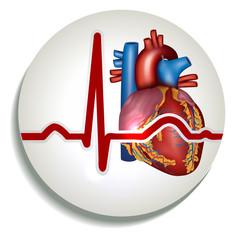 Human heart rhythm icon
