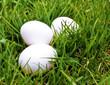 three eggs in grass