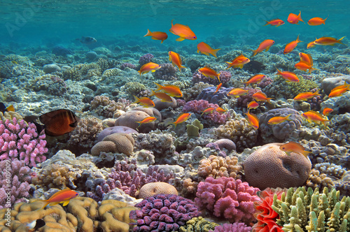 Coral landscape.Red Sea, Egypt