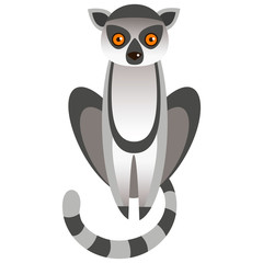 A lemur on white background.
