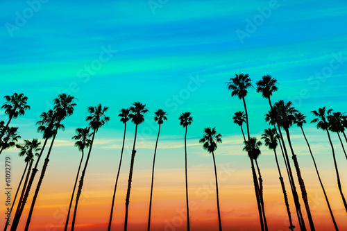 Fototapeta California sunset Palm tree rows in Santa Barbara