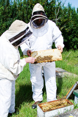 Workers inspecting bees