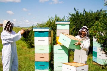 Workers working with beehives