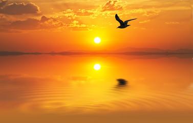 gabiota en la puesta de sol