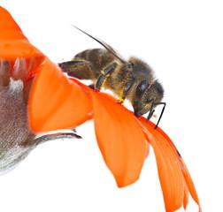 abeja en su flor
