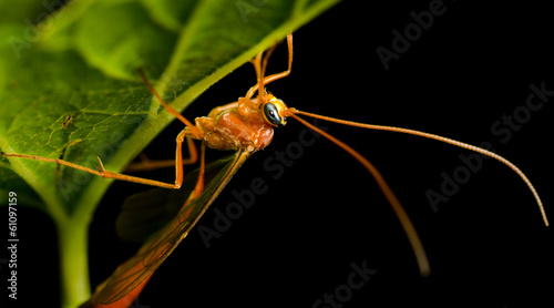 Big Mosquito Sitting on the Leaf